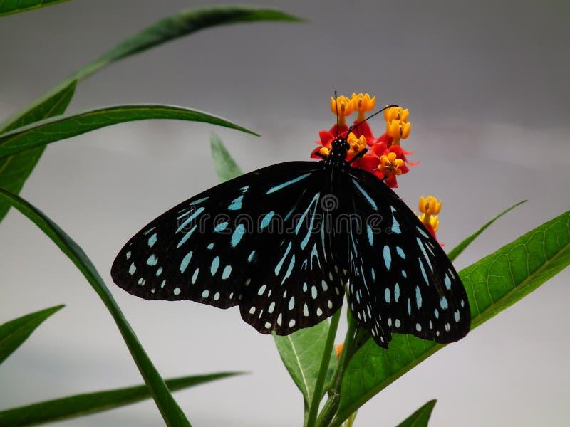 蝴蝶和自然9 免版税库存照片