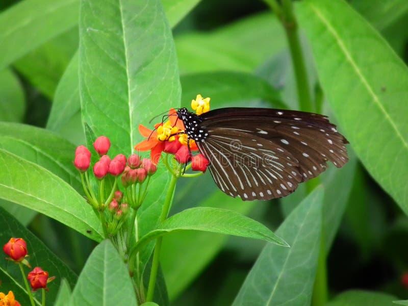 蝴蝶和自然10 库存图片
