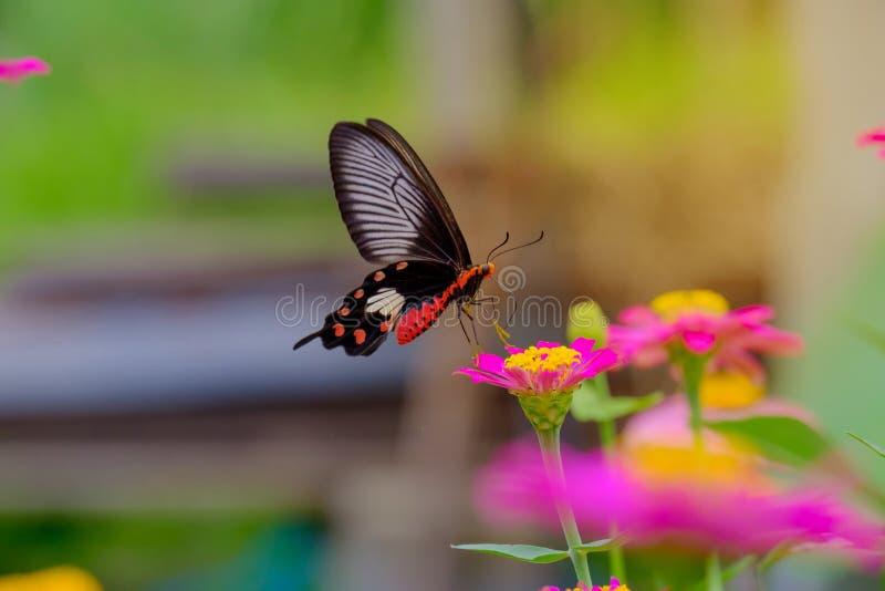 蝴蝶和软的阳光 免版税库存照片