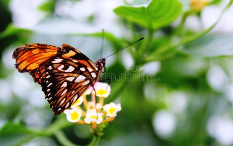 蝴蝶在蝴蝶的庭院里 免版税库存图片