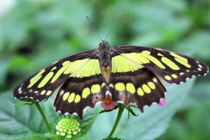 蝴蝶在蝴蝶的庭院里 图库摄影