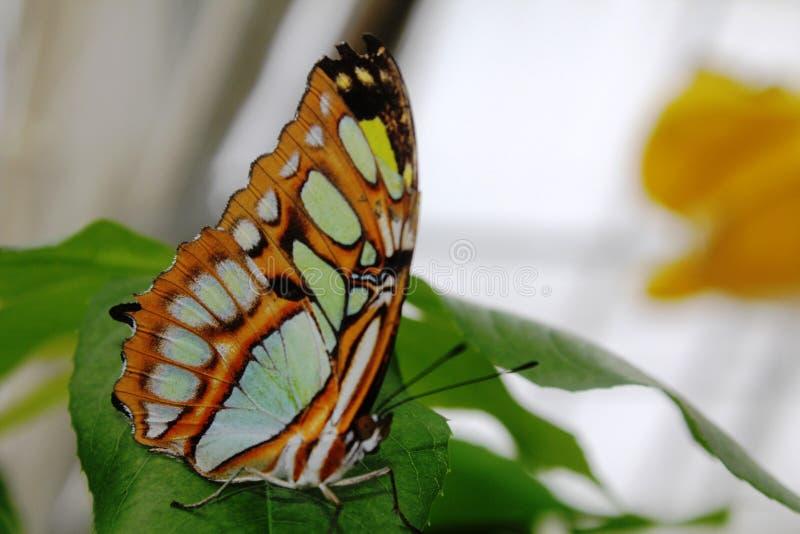 蝴蝶在蝴蝶的庭院里 库存照片
