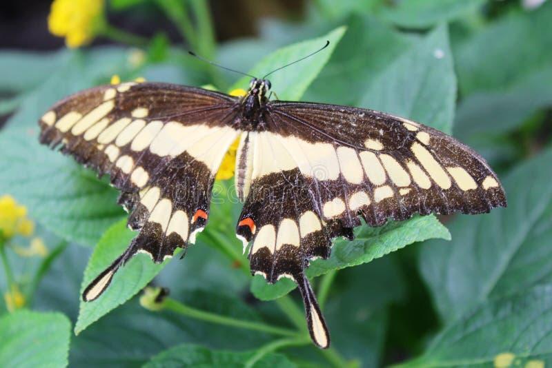 蝴蝶在蝴蝶的庭院里 免版税库存照片