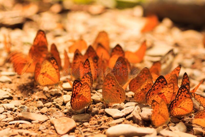 蝴蝶小组 库存照片