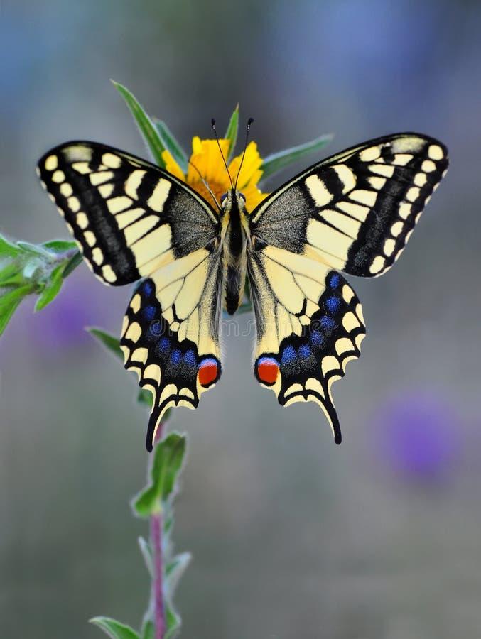 蝴蝶昆虫 库存图片