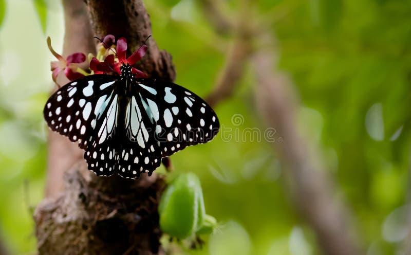 蝴蝶的华美的夏天 免版税库存照片