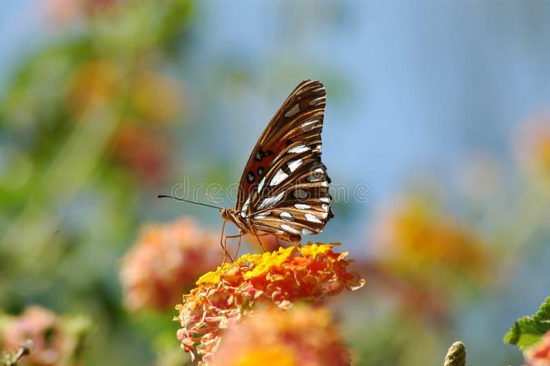 蝶粉花保持了平衡 免版税图库摄影