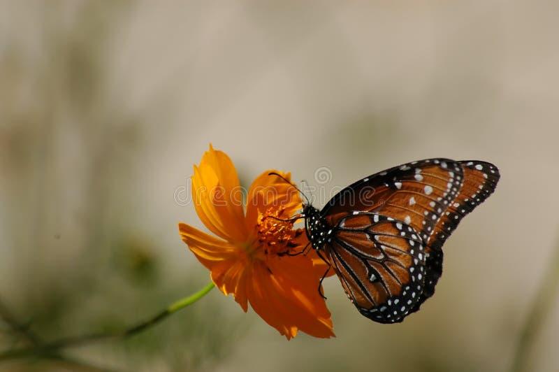 蝶粉花保持了平衡 库存图片