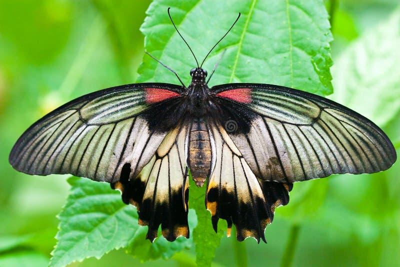 蝶粉花坐的春天 库存照片