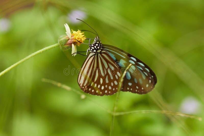 蝶粉花草绿色热带黄色 图库摄影
