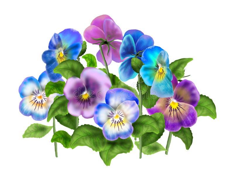 蝴蝶花,在白色隔绝的中提琴花 库存例证