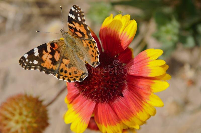3蝴蝶 库存图片