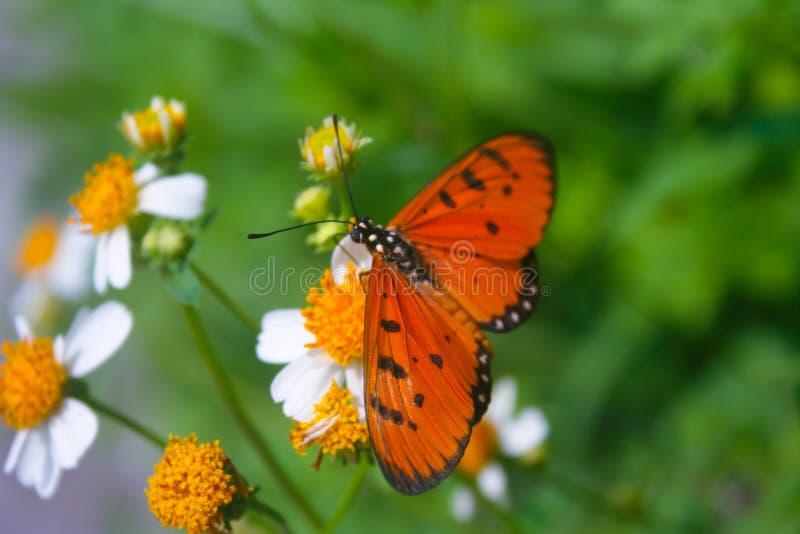 蝴蝶beautyful在泰国在下雨以后 库存图片