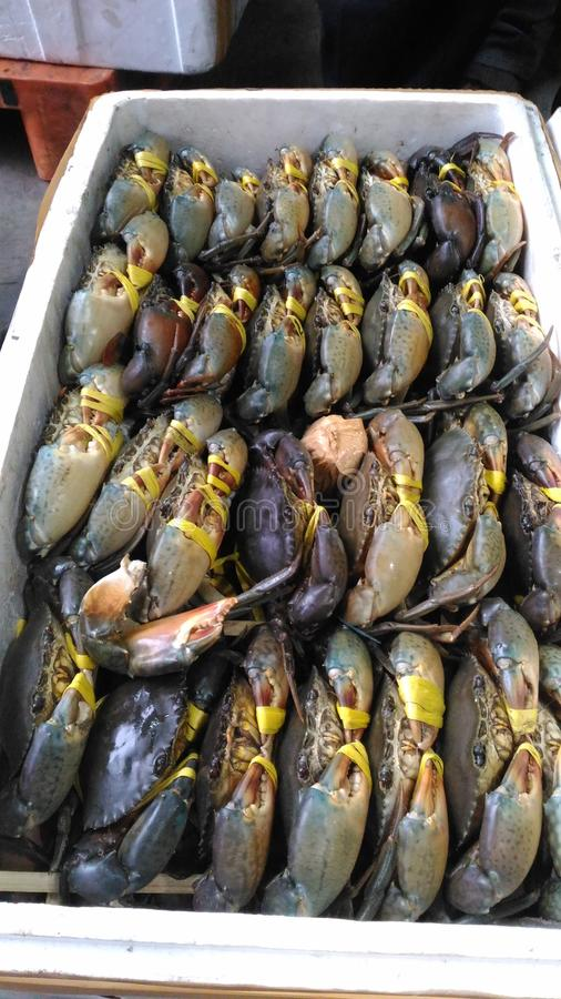 螃蟹卖 图库摄影
