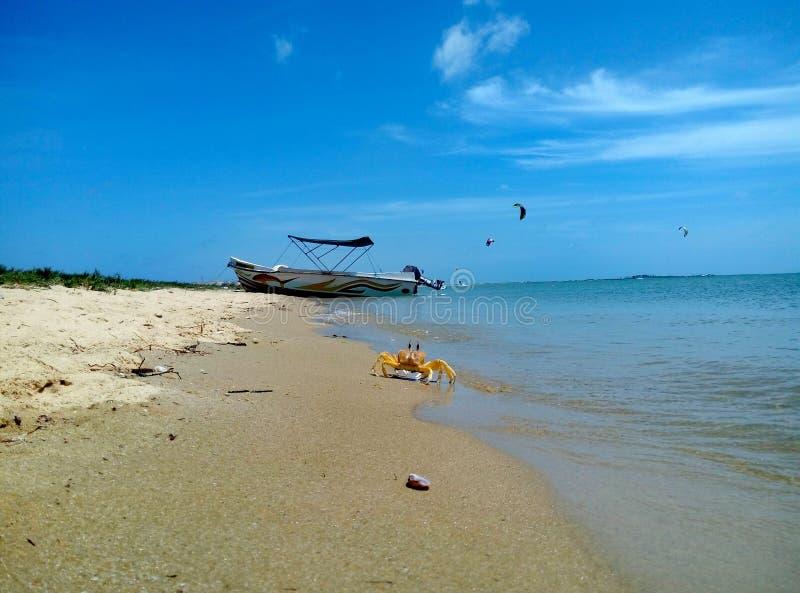 螃蟹和小船在海滩 免版税库存图片