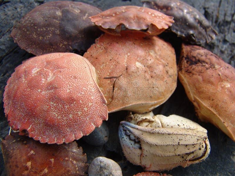 螃蟹壳 免版税图库摄影