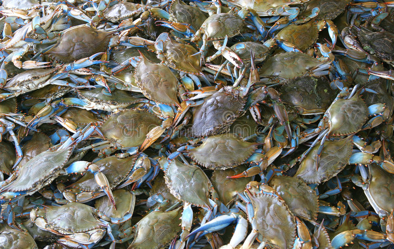 螃蟹居住 库存照片