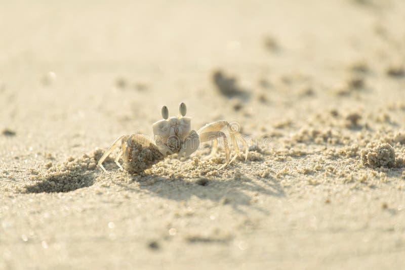 螃蟹开掘孔 免版税图库摄影