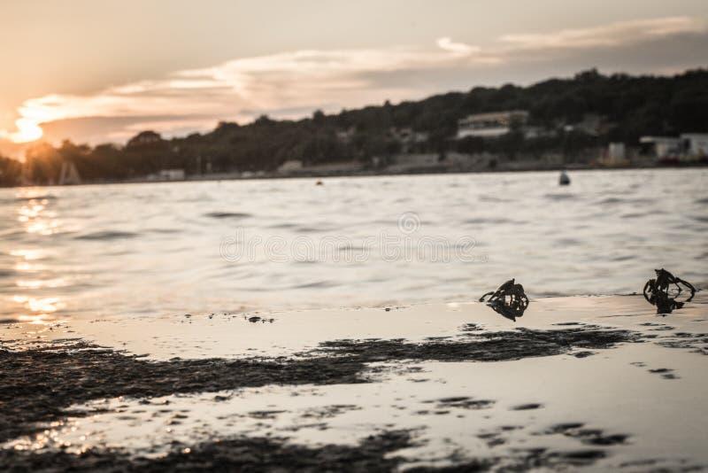 螃蟹战争 免版税图库摄影