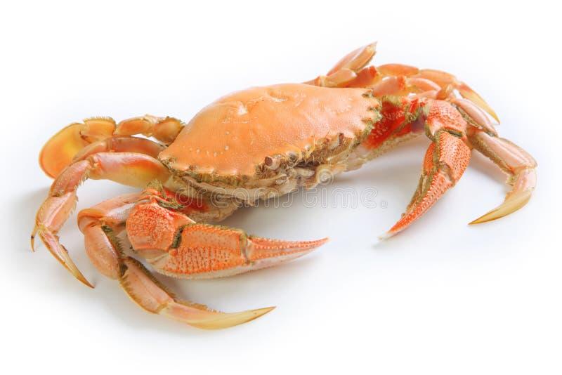螃蟹查出的白色 免版税库存图片