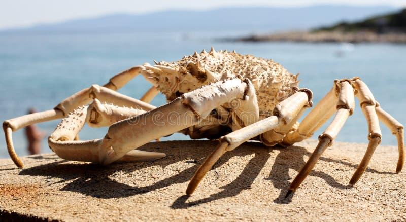 螃蟹概要 免版税库存照片