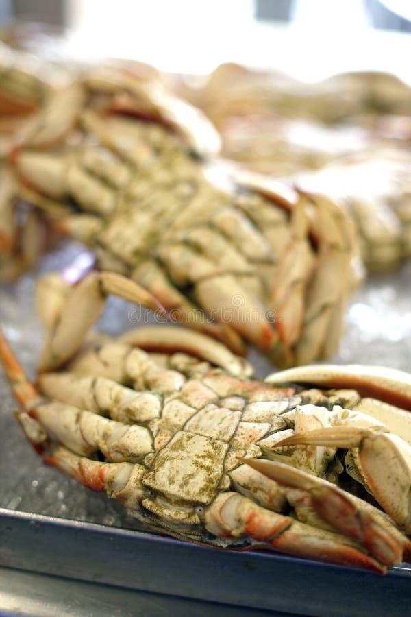 螃蟹渔夫弗朗西斯科s圣warf 免版税库存图片
