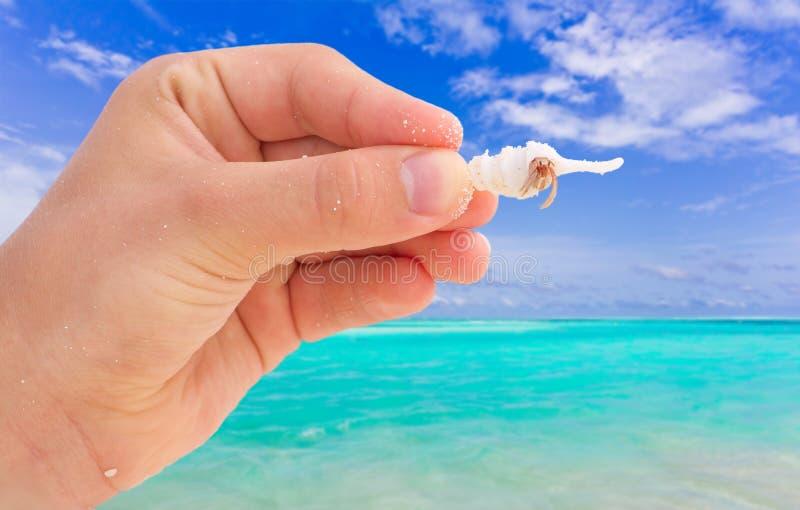 螃蟹现有量海运壳 免版税库存图片
