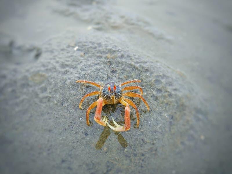 螃蟹的姿势 免版税图库摄影