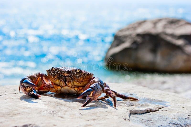 螃蟹石头 免版税库存图片