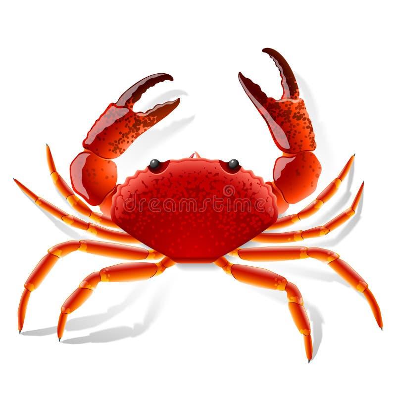 螃蟹红色 向量例证