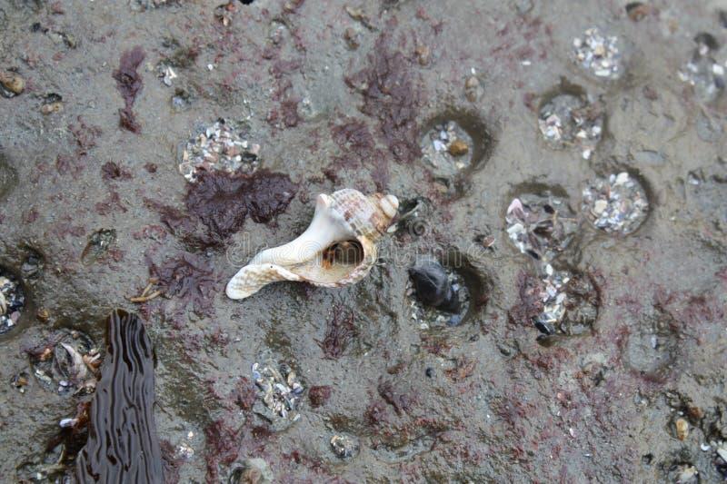 螃蟹重点隐士嘴荷兰 免版税库存照片