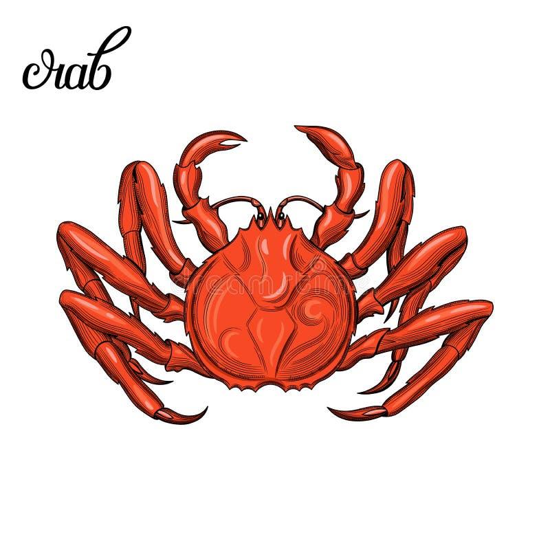 螃蟹 海鲜 库存例证