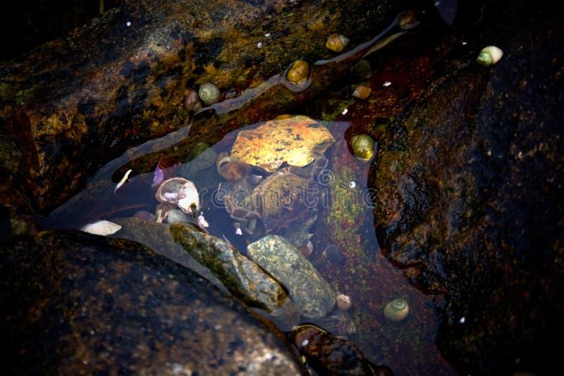 螃蟹细节在浪潮水池的 免版税库存照片