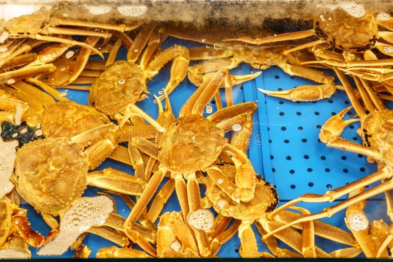 螃蟹 免版税图库摄影