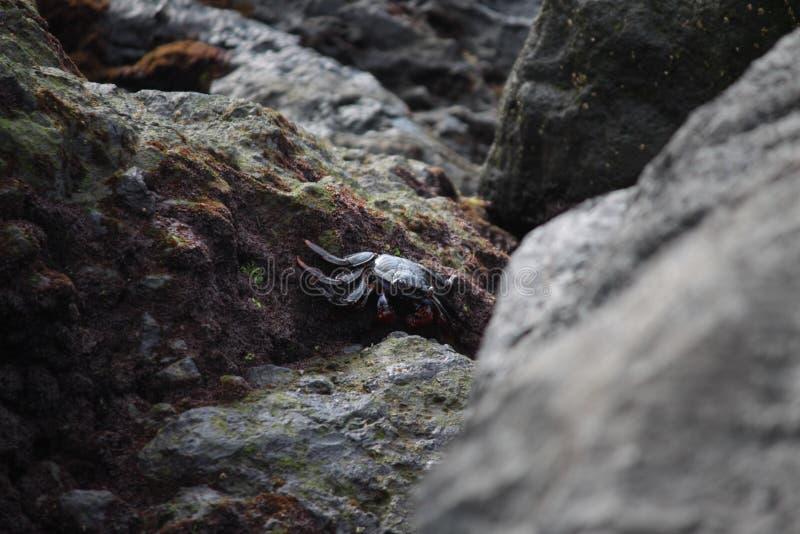 螃蟹 库存图片