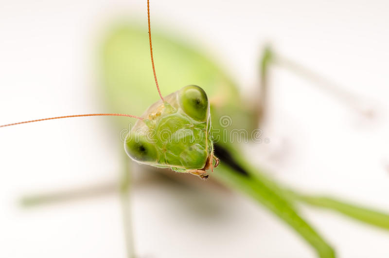 螳螂接近  库存照片
