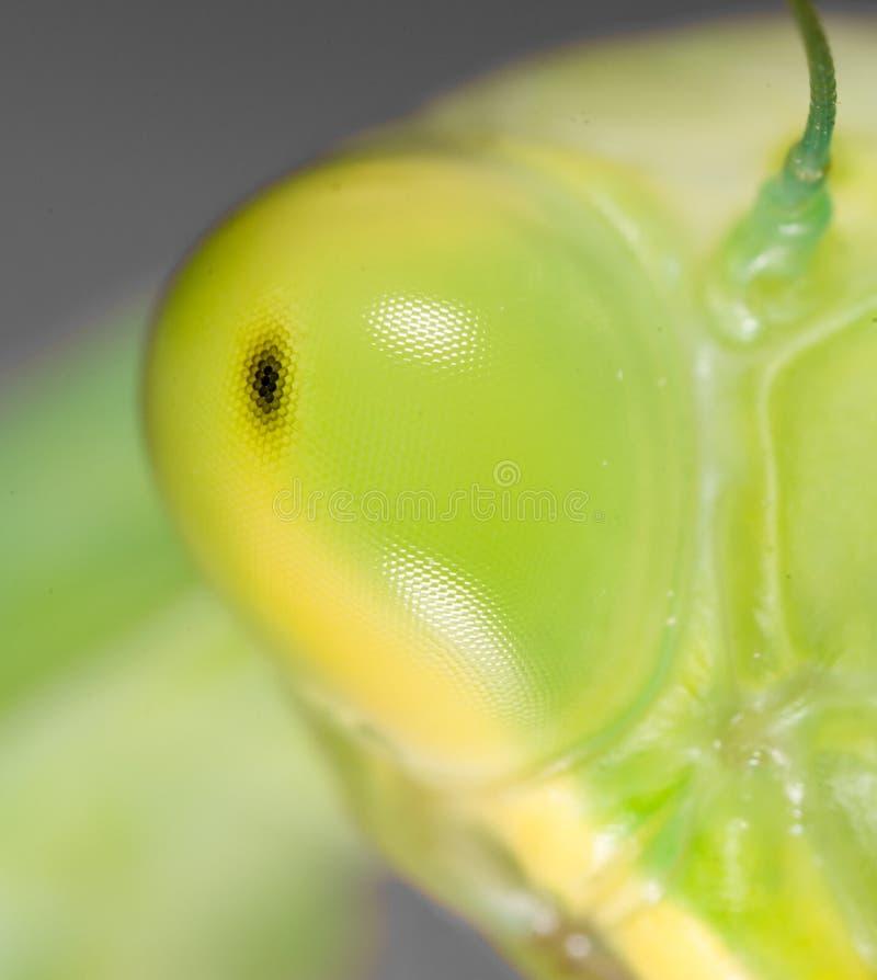 螳螂眼睛 2009朵超级花宏观的夏天 库存照片