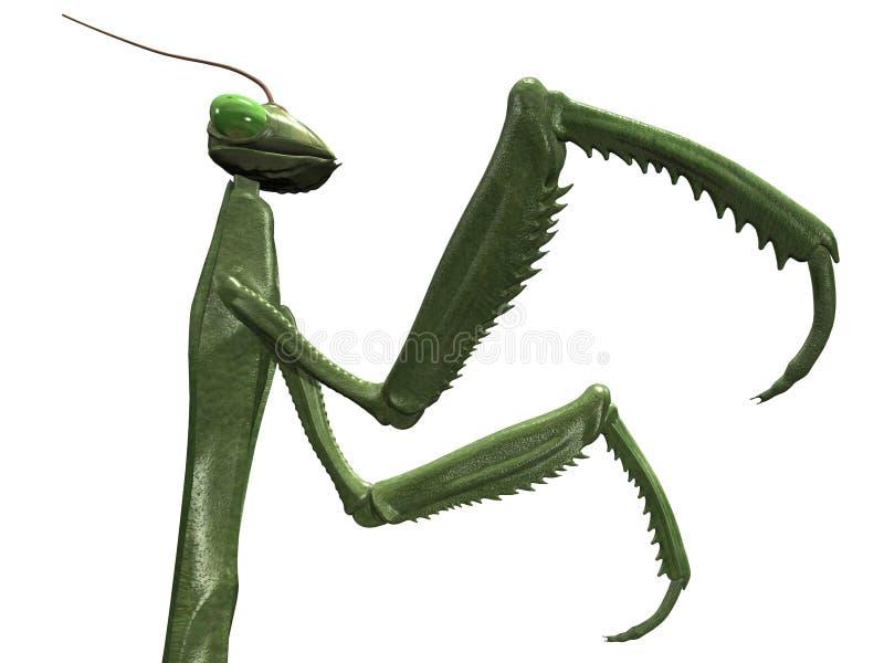 螳螂 向量例证