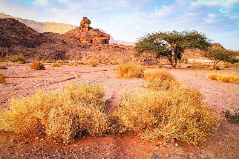 螺旋岩石、树和草在沙漠环境美化,以色列 库存照片