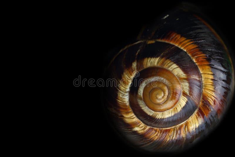 螺旋蜗牛壳 免版税库存照片