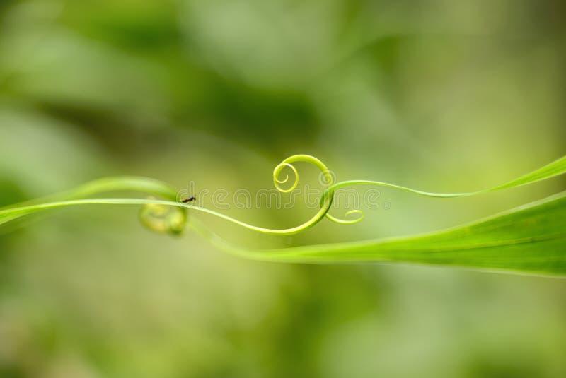螺旋绿色叶子 图库摄影