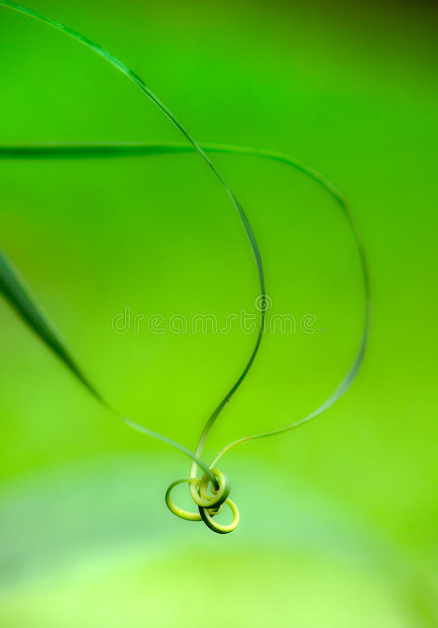 螺旋绿色叶子 免版税库存图片