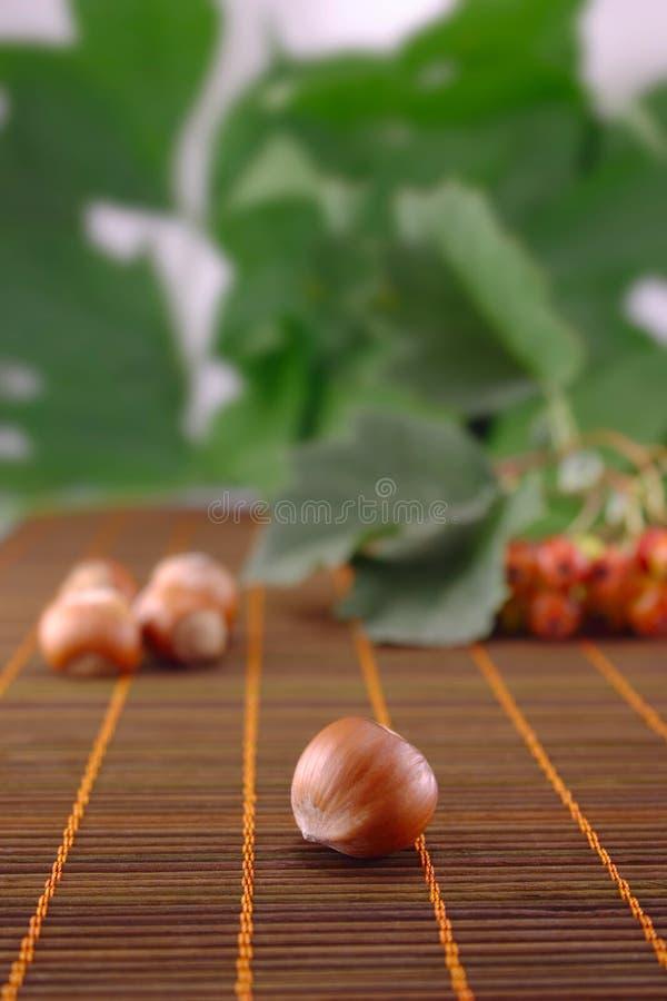 螺母木头 免版税库存图片