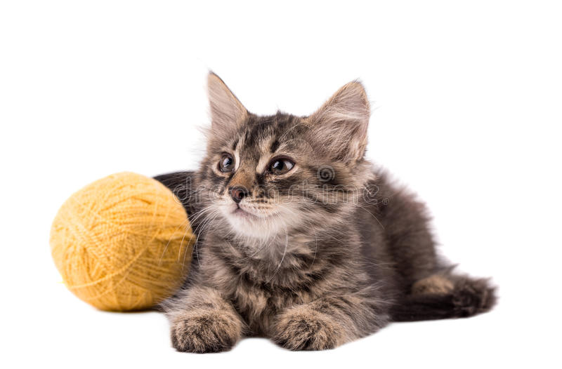 螺纹滑稽的棕色小猫和球  免版税库存照片