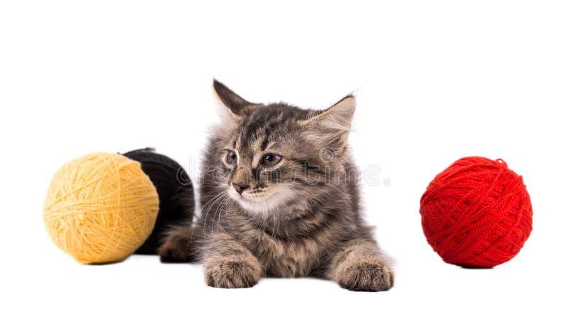 螺纹滑稽的棕色小猫和球  免版税库存图片