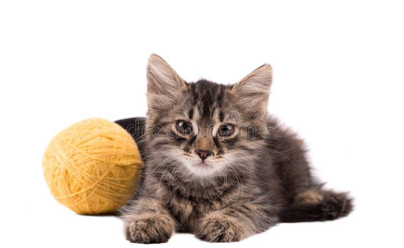 螺纹滑稽的棕色小猫和球  库存照片