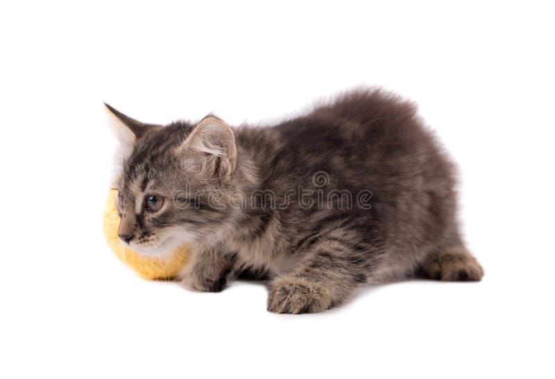 螺纹滑稽的棕色小猫和球  库存图片