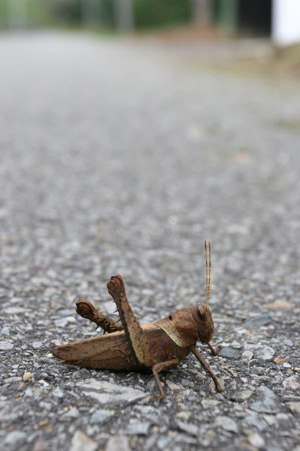 蟋蟀交叉为什么执行路 免版税图库摄影