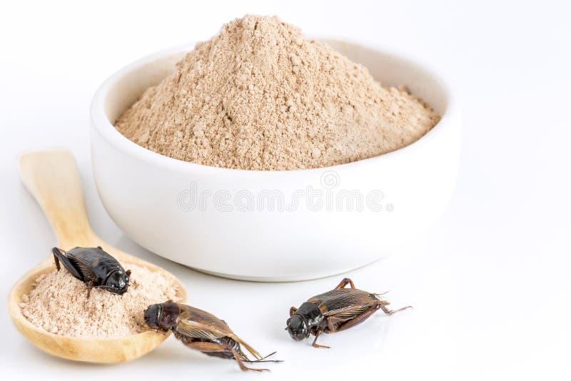 蟋蟀吃的粉末昆虫当食品项目由在碗的煮熟的昆虫肉和木匙子制成在白色背景是好 免版税库存照片
