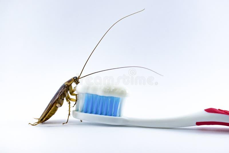蟑螂在白色背景的牙刷 免版税库存照片
